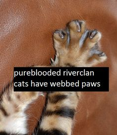 Pure-blooded #RiverClan cats have webbed paws. | Makes sense to me.