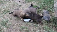 It's lunch time! Lunch Time, The Originals, Dogs, Animals, Animales, Animaux, Pet Dogs, Doggies, Animal