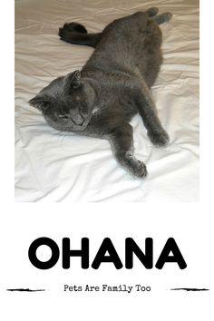 Love, Life, Laugh, Motherhood: Ohana: Pet's Are Family Too