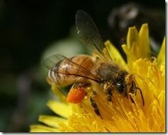 Free online lessons all about beekeeping! If you've never has a hive, you don't know what you are missing! Honey is YUMMY! =)