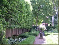 Curb Appeal: The Best Privacy Trees! What to plant if you can see too much of your neighbors yard.