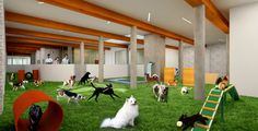 Indoor dog park. What better way to refresh your batteries than to play w/ a dog.