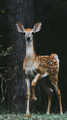 Animals And Camping Forest Animals, Nature Animals, Woodland Animals, Animals And Pets, Wildlife Nature, Safari Animals, Deer Photos, Deer Pictures, Animal Pictures