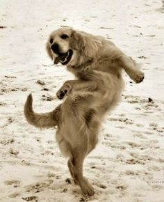 Dog dances like Elaine from Seinfeld