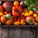 Vše o pěstování rajčat: na záhoně, v pytlích, ve skleníku, výsadba a hnojení - Užitková zahrada