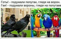 Форс-мажоры 3 сезон 4 серия
