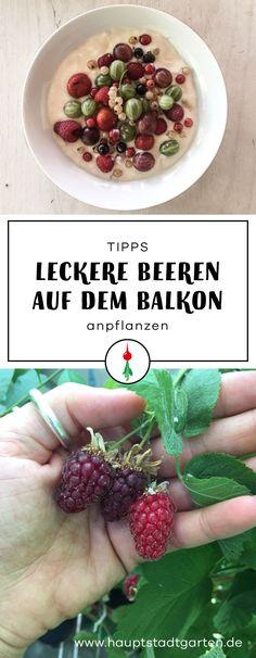 7 hilfreiche Tipps, wie Du leckere Himbeeren und Heidelbeeren auf Deinem Balkon pflanzen kannst.