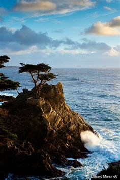 The lone cypress, Carmel, California. The Seventeen Mile Drive is gorgeous. Seen this today to! The Places Youll Go, Great Places, Places To See, Carmel California, California Dreamin', Monterey California, California Vacation, Monterey Hotels, Monterey Bay