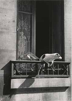 André Kertész, The Concierge's Dog, Paris. 1929, printed ca. 1978. (Gelatin silver print)