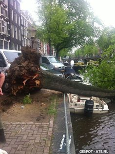 Today's heavy wind blows tree into an Amsterdam Canal  #Herengracht
