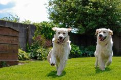 Landscaping for Dogs: Dos and Donts 2019 Mans best friend is not necessarily your yards best friend. Get tips for dog-friendly and more! The post Landscaping for Dogs: Dos and Donts 2019 appeared first on Backyard Diy. Dog Friendly Backyard, Dog Backyard, Backyard Landscaping, Landscaping Ideas, Backyard Ideas, Garden Ideas, Fence Ideas, Backyard Designs, Dog Yard