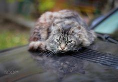  Homless cat  by Olga Apostolova