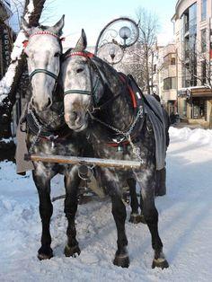 Beautiful Horses, Animals, Pretty Horses, Animales, Animaux, Animal Memes, Animal, Animais, Dieren