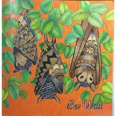 Millie Marotta's Tropical World Bats - Http://ColoringToolkit.com.