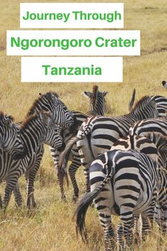 Journey Through The Ngorongoro Crater