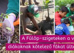 A Fülöp-szigeteken a végzős diákoknak kötelező fákat ültetniük Vietnam, Pizza, Baseball Cards