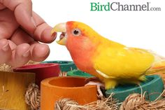 Find out if your bird is fighting with you or playing with you.