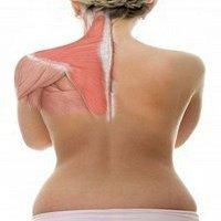 Fibromyalgia/ME/CFS sure feels like it's in the muscles. The trapezius muscles that run from the shoulder down to the middle of the back and up to the neck might just be ground zero for the upper body pain in FM. If you have upper body pain – and upper body pain appears to be rife in FM and ME/CFS – the trapezius muscles are probably involved. This recent study on the proteins present in those muscles sought to understand why they're so often so painful. - ProHealth.com