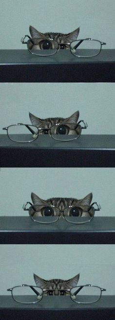 Cats & Glasses