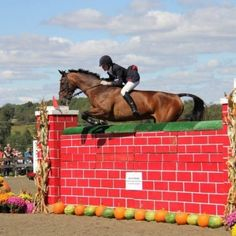 Talk about good balance! Time Goes Back, Side Saddle, Hunter Jumper, Braveheart, Bays, Horse Photos, Show Jumping, Horse Love, Dressage