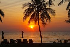 Resort, Hotel, Strand, Boom, Toeristen