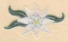 Edelweiss Flower design (C7420) from www.Emblibrary.com