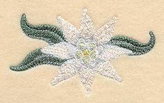 Edelweiss Flower design (C7420) from www.Emblibrary.com