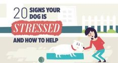 20 Signs of Stress in Dogs [Infographic] Dog Grooming Salons, Poodle Grooming, Dog Grooming Business, Black Lab Puppies, Corgi Puppies, Fruit Dogs Can Eat, Black Labs, Black Labrador, Ear Infection Remedy