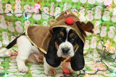 Christmas-Bassett