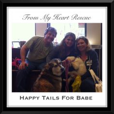 Happy Adoption Day for Babe. Now known as Sophie ❤️  *Foster or Adoption apps., e-transfer or PayPal: frommyheartrescue@hotmail.com  *For Volunteer or Fundraising info: FMHRfundraising@hotmail.com *For Gift Basket donations: FMHRgifts@hotmail.com *For Vet account donations: Brock St. Animal Hospital c/o FMHR (905) 430-2644 ~www.frommyheartrescue.com   ~www.petfinder.com/shelters/ON441.html ~www.facebook.com/frommyheartrescue ~www.twitter.com/FMHRnonprofit ~www.instagram.com/frommyheartrescue