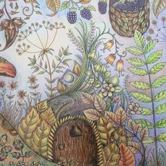 Johanna Basford | Picture by Ann Glaister | Colouring Gallery