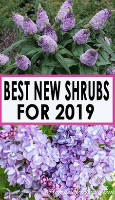 746 Best Garden Shrubs Images In 2020 Shrubs Garden Plants