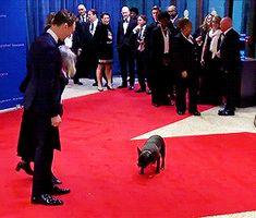 Selbst der hund schmeißt sich ihm vor die Füße xD