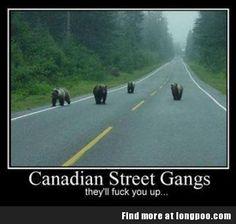Beware on Gangs in Canada