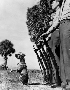 Screwball the Pit Bull Terrier  Marine Mascot, Florida, 1942. I can't find much info online about him other than being a private and the battalion fought in Japan.