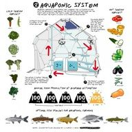 Aquaponic greenhouse for urban food production.