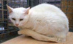 white cat feral rehomed