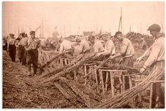 De Lemmer - rijshout