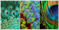 Image result for pretty peacock feather