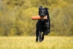 Hunde (9 von 15)