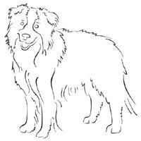 Standing Border Collie Coloring Pages Surfnetkids
