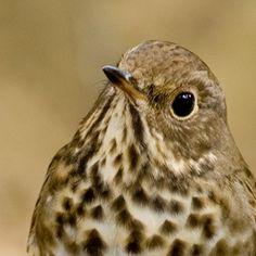 sparrow is a cute little bird...
