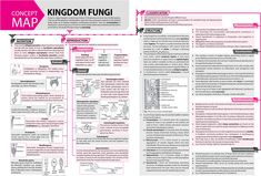 #Kingdom #Fungi - #Concept #Map - #MTG #Biology #Today #Magazine #JEEMain #JEEAdvanced #Class11 #ClassXI #Class12 #ClassXII Study Biology, Biology Lessons, Science Biology, Life Science, Chemistry Notes, Teaching Chemistry, Science Notes, Biology College, Biology Teacher