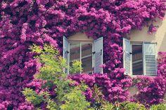 #lilac #room #beauty