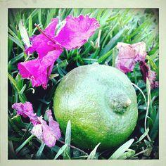 Flor y limón