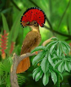 Amazonian royal flycatcher