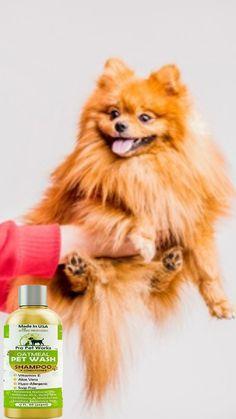 Diy Shampoo, Shampoo And Conditioner, Oatmeal Shampoo, Usa Pro, Dog Grooming, Vitamin E, Aloe Vera, It Works, Cute Animals
