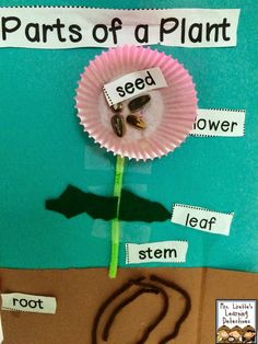 Mrs. Lirette's Learning Detectives: A Simple Plant Project {labeling parts}