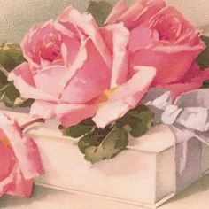 catherine klein roses | Pink ROSES * White GIFT Box & BOW