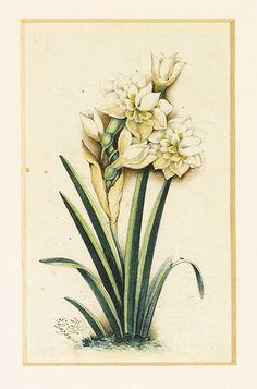 مشق گل، رقم فرصت الشیرازی، سنه 1299، آبرنگ روی کاغذ. 15.5 در 7.5سانتیمتر FLOWER STUDIES, SIGNED BY FURSAT SHIRAZI, PERSIA, DATED 1299 AH/1881 AD watercolour drawings on paper, signed in brown or black ink. 15.5 by 7.5cm.